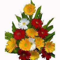 Blooming Moments  A Basket of 14 different colored Gerbera flowers