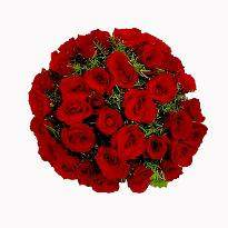 buy Just Love  A bunch of 36 Red Roses