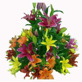 buy Grand Celebration  A basket of 20 Multicoloured Lilies