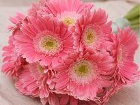 Serene Beauty  A bunch of 12 Pink Gerbera flowers