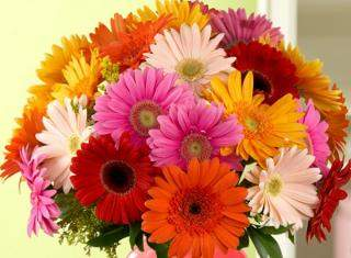 buy Joyous Celebrations - A bunch of 25 Mix Color Gerbera flowers