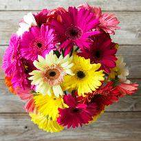 Best Wishes  A bouquet of 12 MultiColored Gerbera flowers delivery in hyderabad