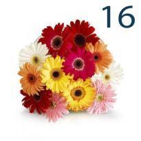 buy 16 Mix Gerbera Flowers