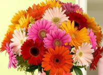 Joyous Celebrations  A bunch of Mix Color Gerbera flowers