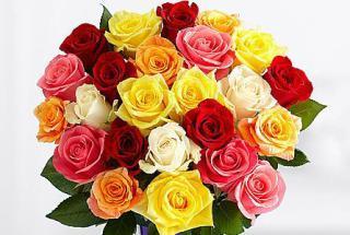 buy Magical Sunny Mixed Roses