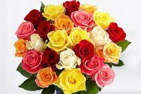 Pretty Bunch  A bunch of  20 Multicolor Roses