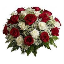 Scintillating Beauty A bouquet of Red and White Roses
