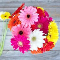 Sweet Wishes  A bunch of Multicolored Gerbera flowers