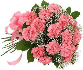 buy 15 Pink Carnations In Pink Packing