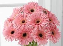 Serene Beauty  A bunch of Pink Gerbera flowers