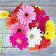 Buy Sweet Wishes  A bunch of Multicolored Gerbera flowers