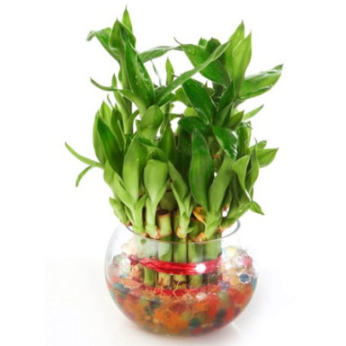 Buy Small Bamboo with bowl