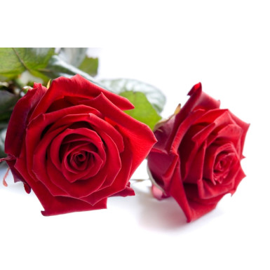 Buy 2 Red rose