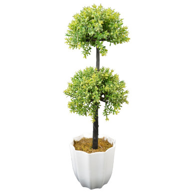 Buy Long Bonsai DDT in Pot