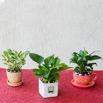 Air Purifying Indoor Garden for Energetic Father