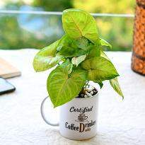 Air Purifying Syngonium in a Coffee Mug for Hardworking Dad