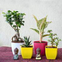 Charming Indoor Plants
