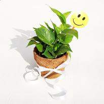 Eco friendly Green Money Plant with Smiley