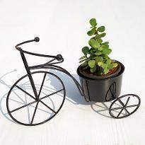 Good Luck Bicycle with Jade Plant