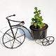 Buy Good Luck Bicycle with Jade Plant