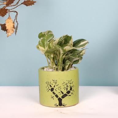 Buy Good Luck Money Plant in Ceramic Pot