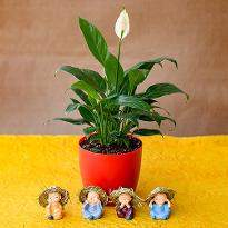 Pleasing Peace Lily with Cute Monks