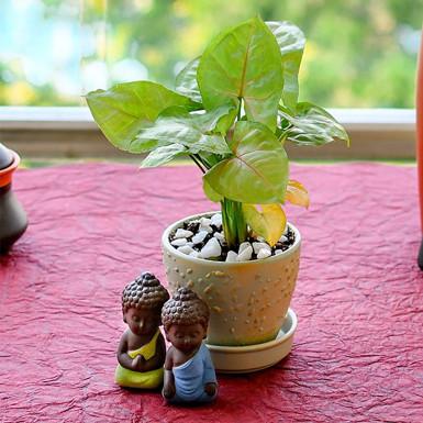 Buy Splendid Syngonium in Ceramic Pot with Buddha Idol