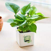 Wonderful Money Plant for Special Dad