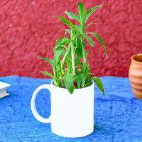 Lucky Bamboo in I Love Dad Mug