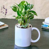 Refreshing Money Plant in I Love Dad Mug