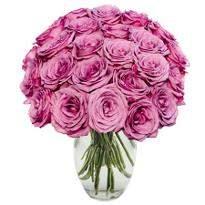 24 Purple Roses