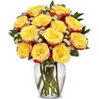 24 Festive Roses