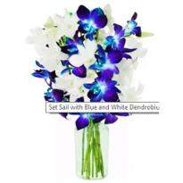 Blue and white Orchid