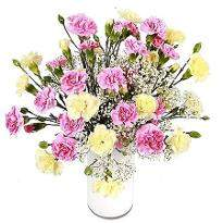 Delightful Carnations
