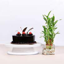 Chocolate Cake and Bamboo