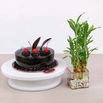 Chocolate Cake and Bamboo
