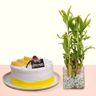 Buy Pineapple Cake With Bamboo